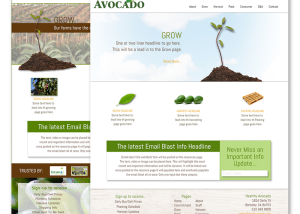 healthy Avocado Conceptual Designs