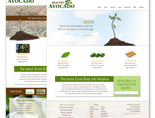 Healthy Avocado Website Conceptual Designs