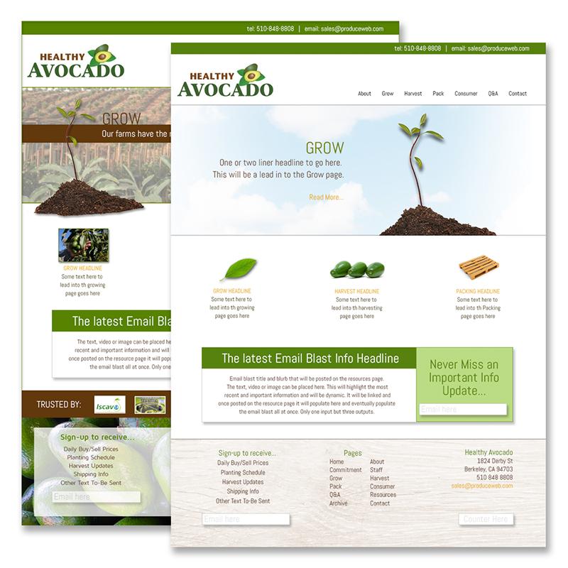 healthy Avocado Conceptual Designs